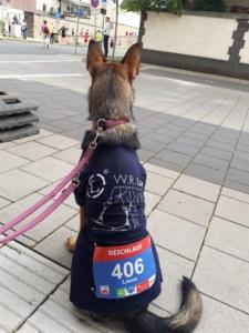 Auch Firmenhund Aria lief in der Firmenlaufgruppe mit