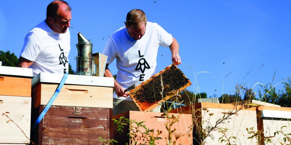 Wir lieben Bienen - Ernte