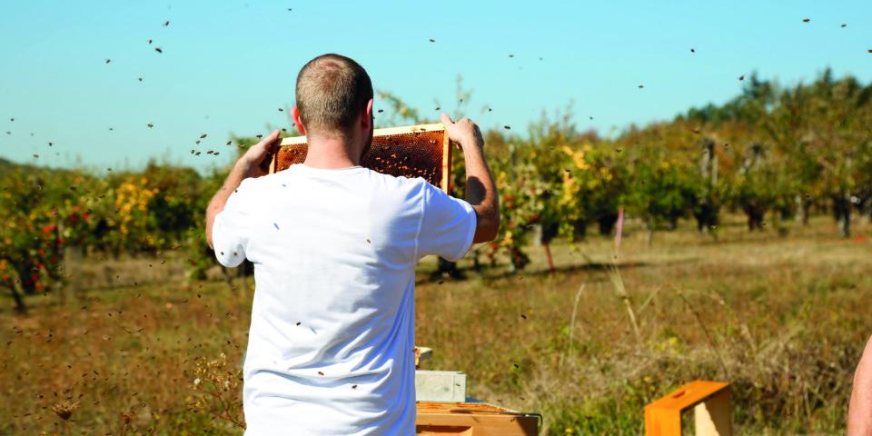 Wir lieben Bienen - Überprüfung