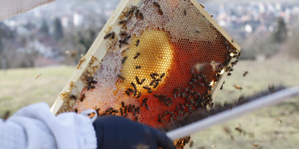 Die Bienen waren fleißig