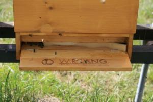 Das Jahr beginnt - Unsere Bienenbeute - Bild 2