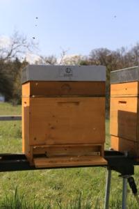 Das Jahr beginnt - Unsere Bienenbeute - Bild 3