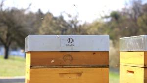 Wir lieben Bienen! - Unsere neuen Mitarbeiterinnen in unser eigenen Bienenbeute